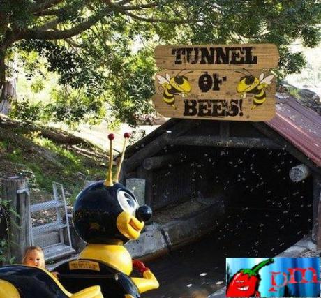 abelha_tunel